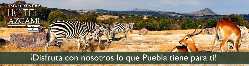 Safari en Puebla